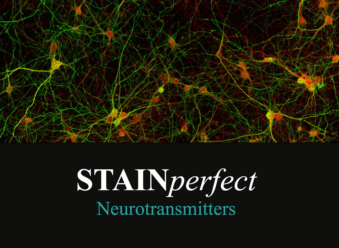 STAINperfect Immusmol